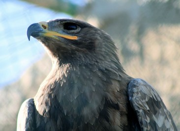 falconrycentre..