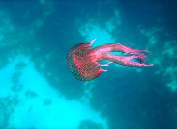 underwatersafari....